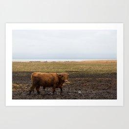 Highland cow in Denmark Art Print