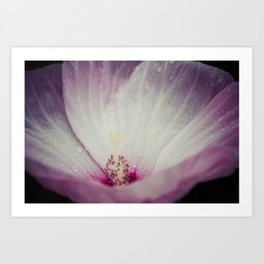 Pink and White Flower Art Print