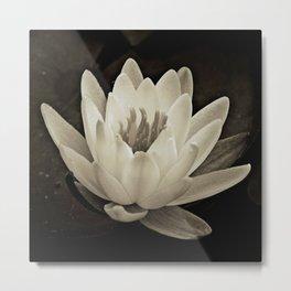 Water Lily In Depia Metal Print