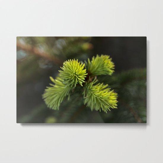 New Growth Pine Needles Metal Print
