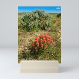 Indian_Paintbrush on Western_Plains - Sweetwater_County, Wyoming Mini Art Print