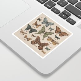 Butterflies and Moth Specimens Sticker