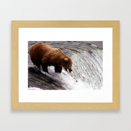 Bear Catching Salmon - Wildlife Photography Framed Art Print