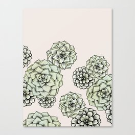 Rosette Succulents Canvas Print