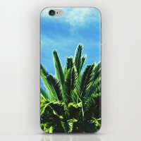 """palm tree iPhone & iPod Skins featuring Palm TreE  by """"CVogiatzi."""