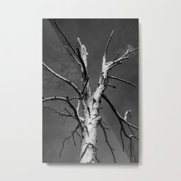 Cleave Metal Print
