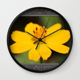 Cosmos Sulphureus named Ladybird Dwarf Lemon Wall Clock