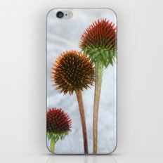 Stripped Echinacea iPhone & iPod Skin