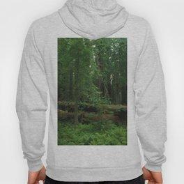 Fallen Tree in The Dense Forest Hoody
