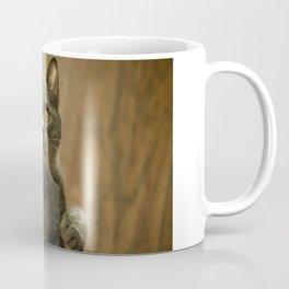 Cat, Cats, Cat Love - Super Cute Cat Coffee Mug