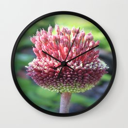 Close Up of An Ornamental Onion or Drumstick Allium Wall Clock