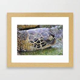 Hawaiian Honu Framed Art Print