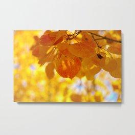 Sunlight through autumn aspen leaves Metal Print