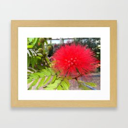 Powder Puff Tree Framed Art Print