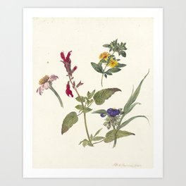 Pieter Ernst Hendrik Praetorius - Studies of wild flowers (1837) Art Print