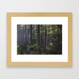 Bayou 6 Framed Art Print