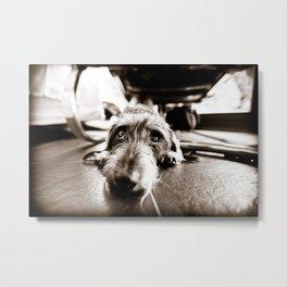 DACKEL DOG #19 Metal Print