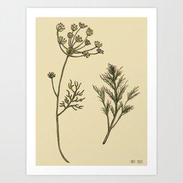 Dill Botanical Art Print
