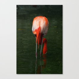 Shrimping Canvas Print