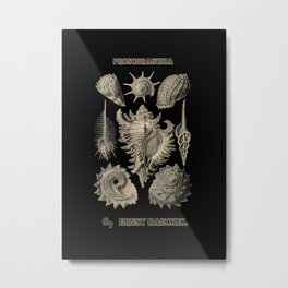 """Prosobranchia"" from ""Art Forms of Nature"" by Ernst Haeckel Metal Print"
