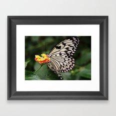 White Butterfly On Flower Framed Art Print