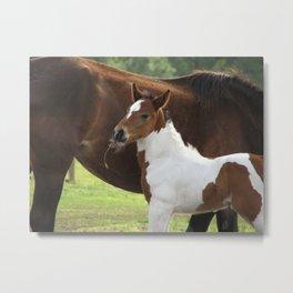 Baby paint horse Metal Print