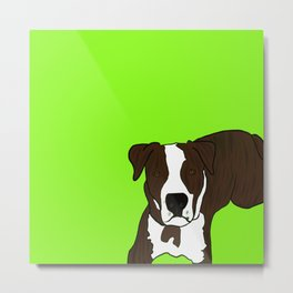 Chico the Brindled Pit Bull Metal Print