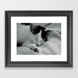 Sleepy Cat - Black and White Cat Photo Framed Art Print