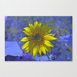Sunny on Blue Canvas Print