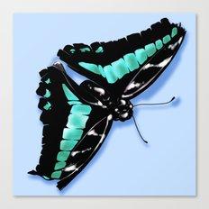 Papillon vert Canvas Print