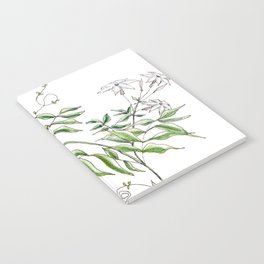 Jasmine Flower Illustration Notebook