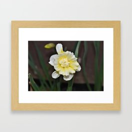 Amazing Daffodil Framed Art Print