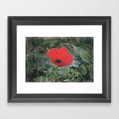 Wild Anemone Framed Art Print