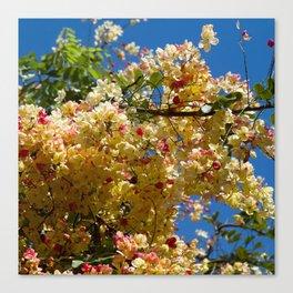 Wilhelmina Tenney Rainbow Shower Tree Canvas Print
