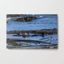 Sea Otter Metal Print