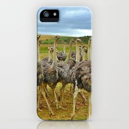 Pride of Ostriches iPhone Case
