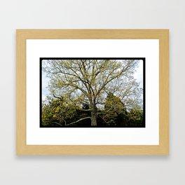 Great Oak at Winged Deer Park Framed Art Print