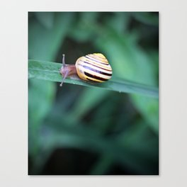 Snail in His Green Jungle Canvas Print