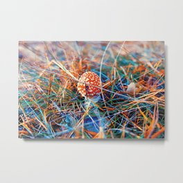 Young fly amanita Metal Print