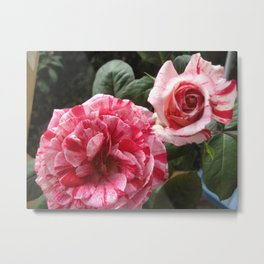 Striped Rose Medley Metal Print
