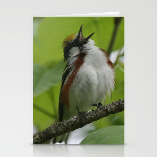 Chestnut-sided Warbler Stationery Cards