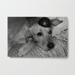 Dog look Metal Print