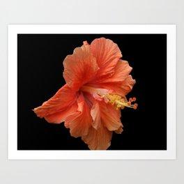 Double Orange Hibiscus DPG160419 Art Print