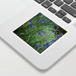 Irises Sticker