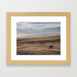 Wild horse in Ecuador Framed Art Print