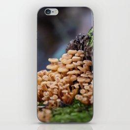 Mushroom Forest iPhone Skin