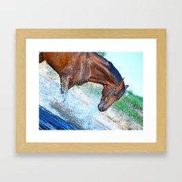 horse collection. Trakehner. swimm Framed Art Print