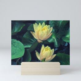 Yellow Lotus Flowers Mini Art Print