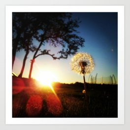 Dandelion Sunset Art Print
