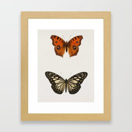 Collection of hand drawings of butterflies illustrated by Charles Dessalines D' Orbigny (1806-1876) Framed Art Print